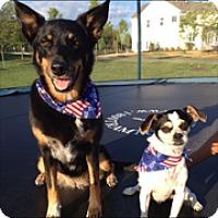 Adopt A Pet :: Buggz (COURTESY POST) - Baltimore, MD