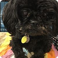 Adopt A Pet :: Duke - Tucson, AZ