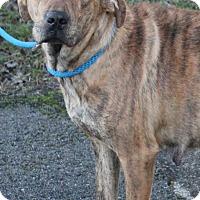 Adopt A Pet :: Jada - Foster, RI