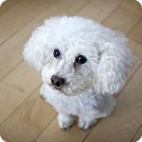 Adopt A Pet :: Sasha - Courtice, ON