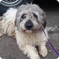 Adopt A Pet :: Julius - Fresno, CA