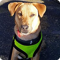 Adopt A Pet :: CHANCE - Cordes Lakes, AZ