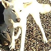 Adopt A Pet :: Buddy - Orange Cove, CA