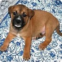 Adopt A Pet :: Dennis - Minneola, FL