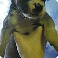 Adopt A Pet :: Agatha - Ft. Lauderdale, FL