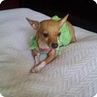 Adopt A Pet :: Angel - Hilliard, OH