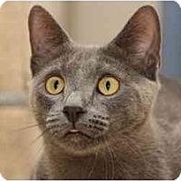 Adopt A Pet :: Zeke - Bonita Springs, FL