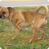 Adopt A Pet :: TUG - ROCKMART, GA