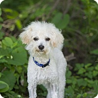 Adopt A Pet :: Mateo - Calgary, AB