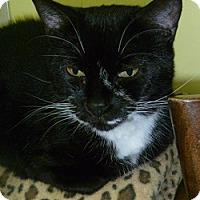 Adopt A Pet :: Lola - Hamburg, NY