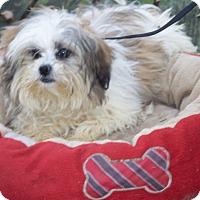 Adopt A Pet :: Rascal - Antioch, IL