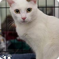 Adopt A Pet :: Rosie - Merrifield, VA