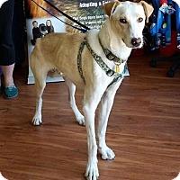 Adopt A Pet :: Ghost - Saskatoon, SK