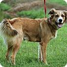 Adopt A Pet :: AUBREE