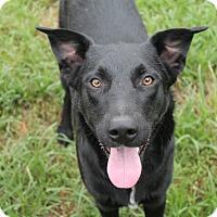 Adopt A Pet :: Boone - Pittsburg, KS