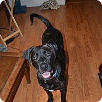 Adopt A Pet :: Rosko - Hollywood, MD