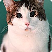 Adopt A Pet :: Stocky - Novato, CA