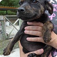 Adopt A Pet :: Keeva - Manning, SC