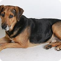 Adopt A Pet :: Clyde - Redding, CA