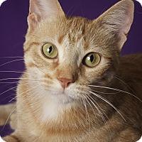 Adopt A Pet :: Alahni - Gilbert, AZ