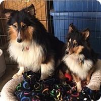 Adopt A Pet :: Mutt & Jeff - Pueblo West, CO