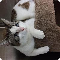 Adopt A Pet :: Ashton - Orlando, FL