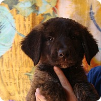 Adopt A Pet :: Atlanta - Oviedo, FL