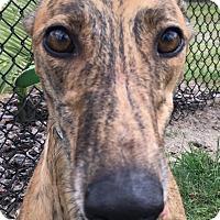 Adopt A Pet :: BFJ Gina - Longwood, FL