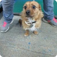 Adopt A Pet :: Ellie - available 5/30 - Sparta, NJ