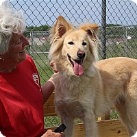 Adopt A Pet :: Snowflake - Elyria, OH