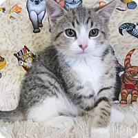 Adopt A Pet :: OREN - New Cumberland, WV