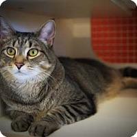 Adopt A Pet :: Howie - Merrifield, VA