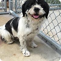 Adopt A Pet :: SOCRATES - Cadiz, OH