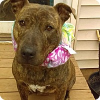 Adopt A Pet :: Crystal Sweet Girl Waiting for a Home - North Creek, NY