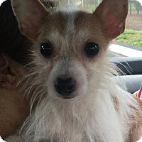 Adopt A Pet :: Roscoe - Boca Raton, FL