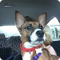 Adopt A Pet :: Micha - Willingboro, NJ