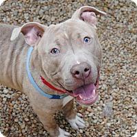 Adopt A Pet :: Sean - Philadelphia, PA