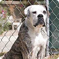 Adopt A Pet :: Cuda - Agoura, CA