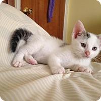 Adopt A Pet :: Allen - Jenkintown, PA