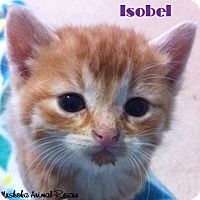 Adopt A Pet :: Isobel - Girly-girl! - Huntsville, ON