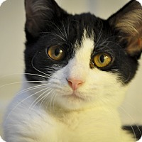 Adopt A Pet :: Charleigh (1/2 PRICE ADOPTIONS - New Smyrna Beach, FL
