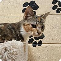 Adopt A Pet :: Nemsy - Smithfield, NC