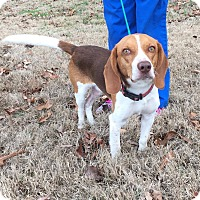 Adopt A Pet :: Hess - Washington, DC