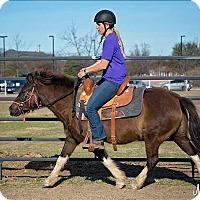 Adopt A Pet :: Short Stop - McKinney, TX