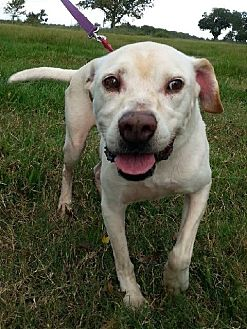 Smiling Dog Rescue Ct