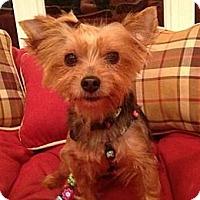 Adopt A Pet :: Sheba - Cleveland, OH