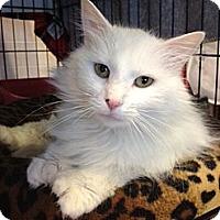 Adopt A Pet :: Emanuele - Byron Center, MI