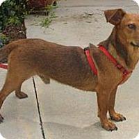 Adopt A Pet :: Jack - Bardonia, NY