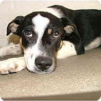 Adopt A Pet :: Bailey - Winter Haven, FL