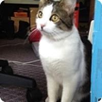 Adopt A Pet :: Mint - Vancouver, BC